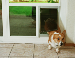 Genial Pet Door With Pet