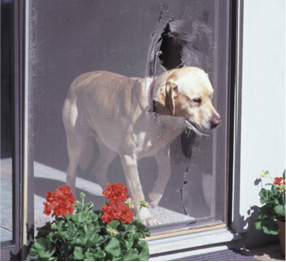 dog in broken screen door | sacramento widow screens and patio doors